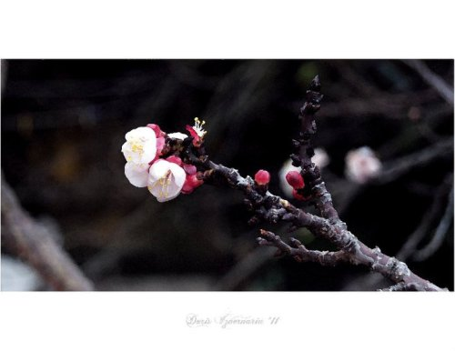 Title: Waiting Springtime Equinox Photo by: Doris Izvernariu 2011 Lisboa remaster Photoshop post prod.CS 6 by : danIzvernariu ©2014 ʘ 6014 New Zealand M ∴ B ∴Dan Izvernariu Workshop This picture belong to ☤322 THE STORYTELLER WordPress